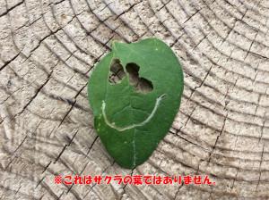 葉っぱおばけ加工